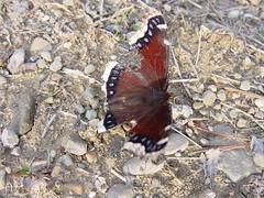 First Day of Butterflies