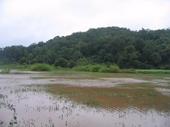 Kollibacchalu Dam -Malenadu Heavy Rain Effects Photography By Chinmaya M.Rao   (105)