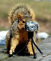 Barley Squirrel Lines Up A Shot