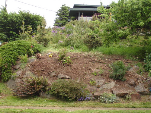 Reclaiming Our Front Yard From the 1970s [Or: The Juniper Removal Project]