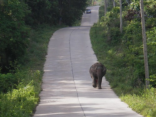 Elefant auf Ko Lanta
