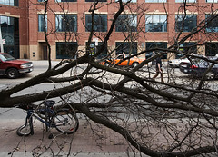 fallen_tree_bike_03