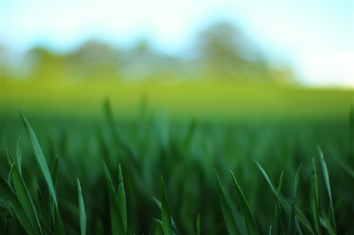 Green Green Green Grass by Bill Liao, on Flickr