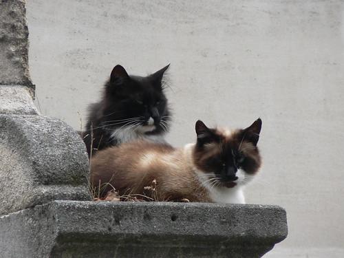 Cats at Cimetière Saint-Vincent