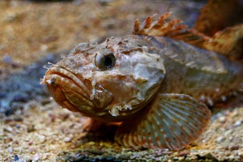 Риба из музеја океанографије у Монаку (аутор yeenoghu)