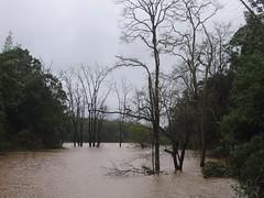 Kollibacchalu Dam -Malenadu Heavy Rain Effects Photography By Chinmaya M.Rao   (43)