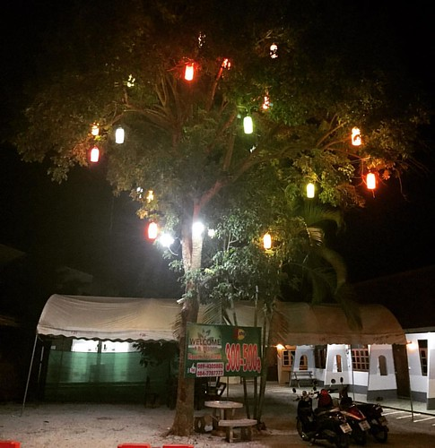 #Light #tree  @ #Pai #Thailand  #thailoup #traveloup