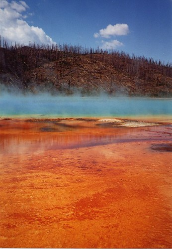 Bacterial mat, Yellowstone
