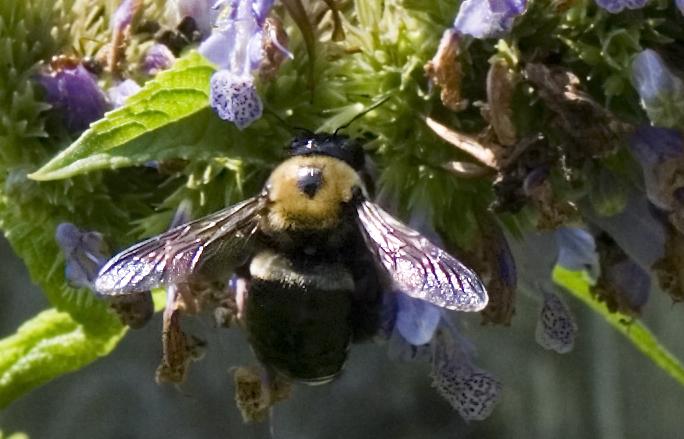 Bee Still