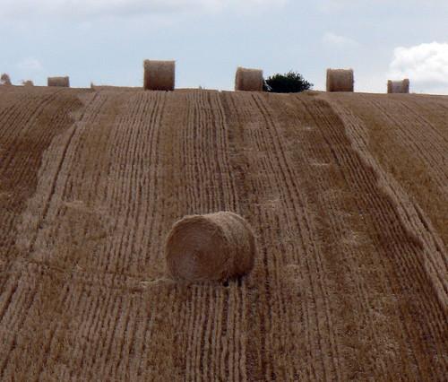 Hay (by Claudecf)