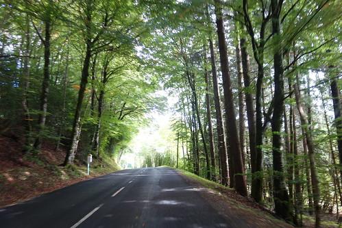 Des forêts de chênes, pins et bouleaux se trouvent sur notre chemin