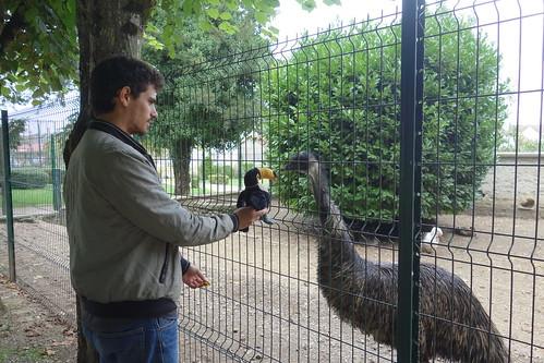 Face à face numéro 1 entre drôles d'oiseaux