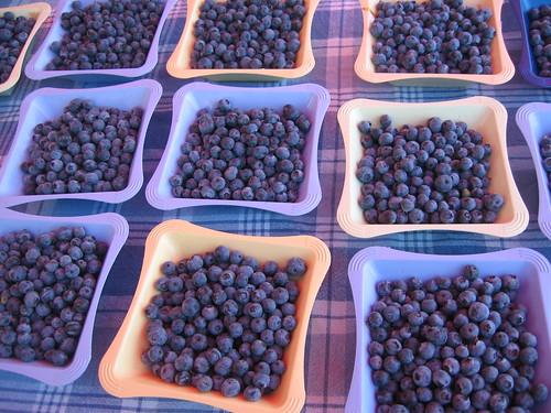 """the bluest blueberries"""