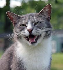 Cat smiling at sanctuary