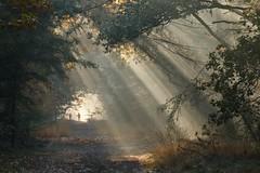 Zonnestralen in het bos.