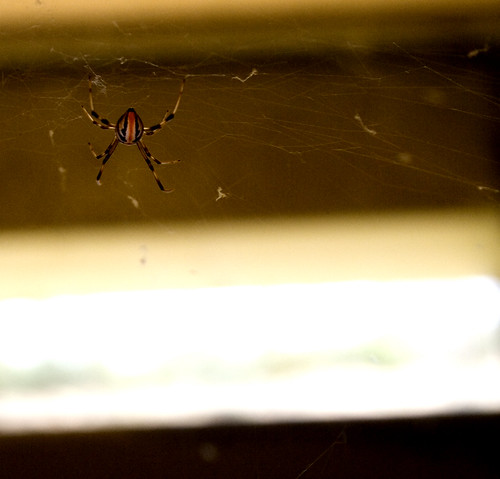 spider in the mailbox