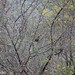 "Jiuzhaigou-15 • <a style=""font-size:0.8em;"" href=""http://www.flickr.com/photos/13484070@N06/22570605568/"" target=""_blank"">View on Flickr</a>"