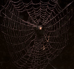 "CRW_4083: Large Spider Web • <a style=""font-size:0.8em;"" href=""http://www.flickr.com/photos/54494252@N00/9092672/"" target=""_blank"">View on Flickr</a>"