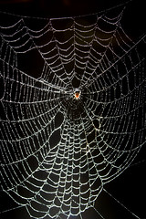 "CRW_4098: Spider Web • <a style=""font-size:0.8em;"" href=""http://www.flickr.com/photos/54494252@N00/9092813/"" target=""_blank"">View on Flickr</a>"