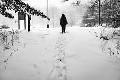 winteradventure20170107-02727.jpg