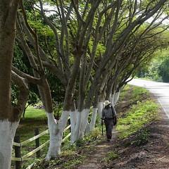 Walking home. #TheWorldWalk #travel #mexico #twwphotos