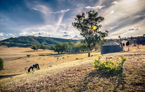 Ozzy Horse Farm