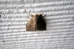 Moth Hanging Out
