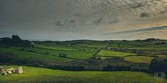 Druid's Meadows