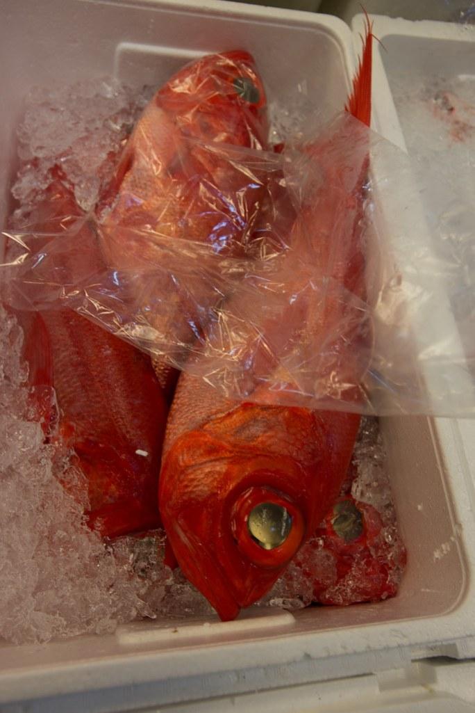 Fishy fish up to no good