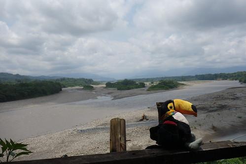 Pelico pose devant un des nombreux fleuves qui lézardent autour de Villa Tunari