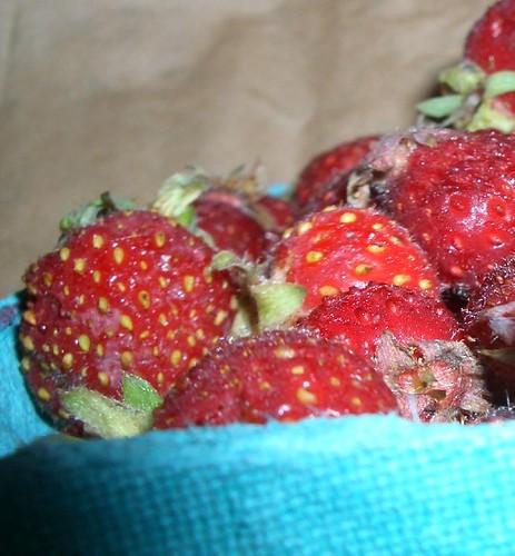 Strobbleberries