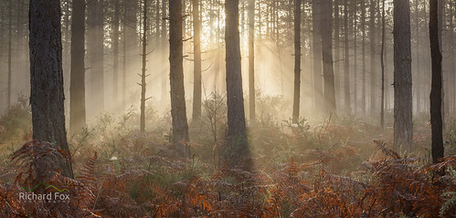 Forest Beacon