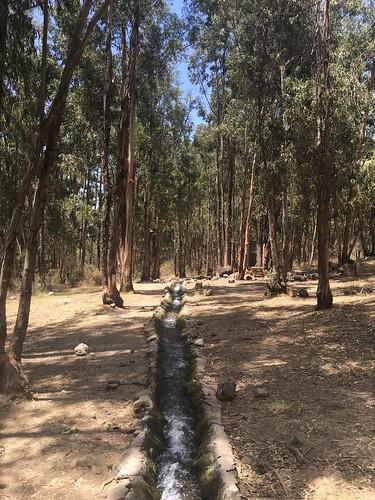 Le parc s'ouvre sur une forêt d'eucalyptus... enivrant !