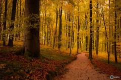 Sanspareil im Herbst-18