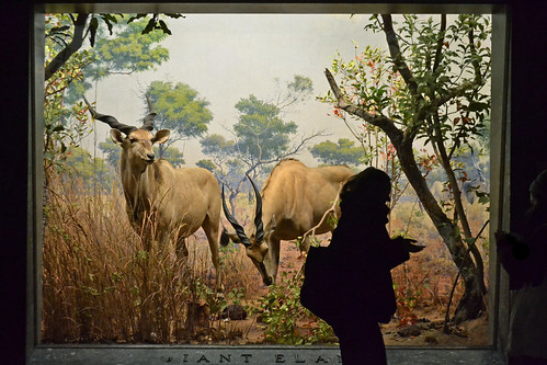 The Giant Eland (New York)