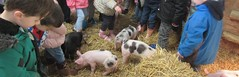 Rainbow Class meet the Piglets