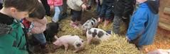 Rainbow Class meet the Piglets