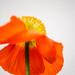 Vårtecken - nu kommer färgerna