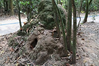 Air holes in termite mound, Cu Chi tunnels