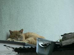 straycat, Apr. 27, 2005