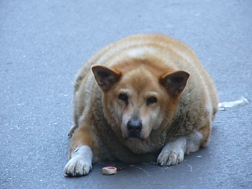 Obese canine from New Orleans