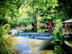 Celi Chalet Ulu Kelang, 68000 Ampang Jaya, Selangor 019-377 3413 https://goo.gl/maps/DF74GHYgAtJ2  #water #tree #nature #travel #holiday #trip #Asian #Malaysia #Selangor #ampang #travelMalaysia #holidayMalaysia #树木 #旅行 #度假 #亚洲 #马来西亚 #雪兰莪 #安邦 #马来西亚旅行 #马来西亚