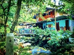 Chalet Warisan Hati Rimba,Kemensah Ulu Kelang, 68000 Ampang Jaya, Selangor 013-231 5711 https://maps.google.com/?cid=6661119350354708072&hl=en&gl=gb  #tree #nature #travel #holiday #trip #Asian #Malaysia #Selangor #ampang #travelMalaysia #holidayMalaysia