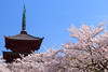 Photo:Cherry Blossms By