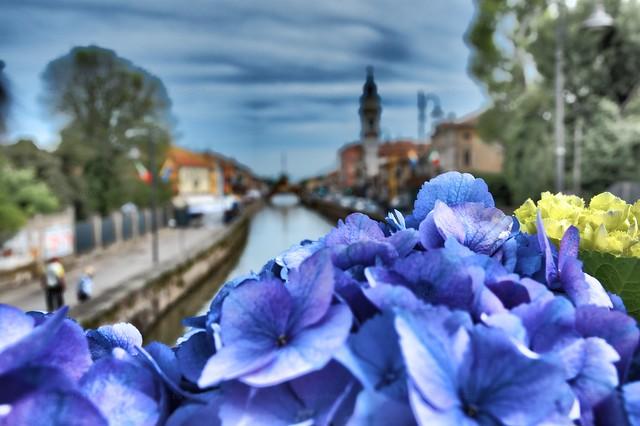 Il mio piccolo paese, a Canale Fiorito