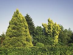 20180519-191235 Spring Green Garden - Tarbek