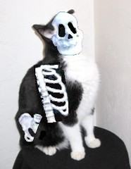 Spew Warning - Montana the Cat's Halloween Costume