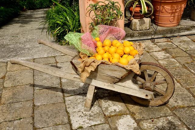Lemons in wheelbarrow