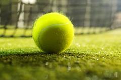 Tennis+Ball+%2832%2F365%29