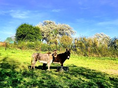 Enjoying the sun! #donkeys #hdr #hessen